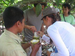 kalibaru-cacao-plantation